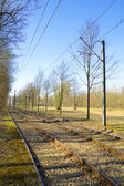 Vías del tranvía a lo largo de un bosque — Foto de Stock
