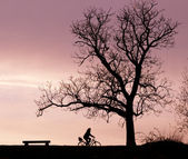 Bench Tree and Bicycle Silhouette — Stock Photo