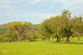 Elma ağaçlarının bir çayır üzerinde — Stok fotoğraf