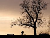 Tree silhouette and cyclist — Stock Photo