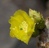 Cactus Flower Detail 1 — Stock Photo