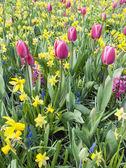 Mixed bulb flowers — Stock Photo