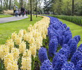 Bed of blue and white hyacinths with tourists in background — Stock Photo