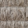 Stock Photo: Detail of brushwood fence