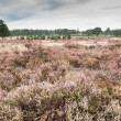 Stock Photo: Heath landscape
