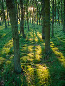 Sunshine and shadow in woodland — Stock Photo