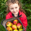 Small girl with sack of apples — Foto Stock