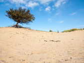 Small boy in dune landscape — Stock Photo