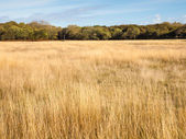 Grassland and woodland landscape — Stock Photo