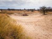 Winter dune landscape — Stock Photo