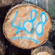 Sawn log with painted code — Stock Photo
