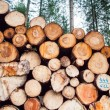 Freshly felled logs — Stock Photo