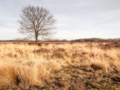 Winter oak on grassland — Stock Photo