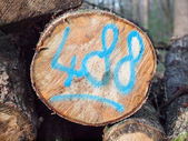 Sawn log with painted code — Stockfoto