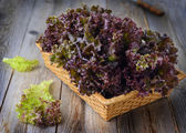 Purple lettuce — Stock Photo