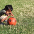 A Young boy playing with a red ball in a green grass of a garden or a park — Stock Photo