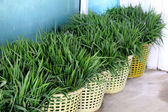 Green grass in a basket. — Stock Photo