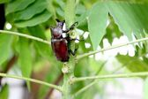 Beetle and tree — Stock Photo