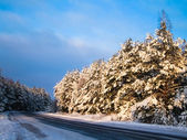 Road in winter forest — Stock fotografie
