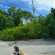 Parc Manuel Antonio — Stock Photo #36213615