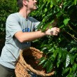 Coffee plantation — Stock Photo