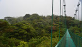Hanging bridge, Monteverde — Stock Photo