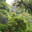 Cloudy forest of Monteverde — Stock Photo