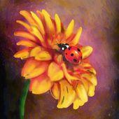 Gerber and ladybird — Stock Photo