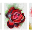 Collection of red roses — Stock Photo