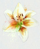 Lily — Foto Stock