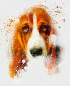 Animal Collection: Dog — Stock Photo