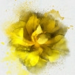 Yellow flower sketch — Stock Photo