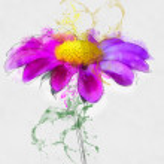 Purple daisy flower — Stock Photo #33744469