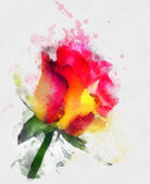 Yellow and red rose hand drawn — Stock Photo