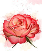 Red rose illustration — Stock Photo