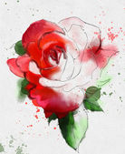 Red hand drawn rose sketch — Stock Photo