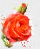 Red hand drawn rose sketch — Fotografia Stock