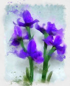 Blue irises illustration — Stock Photo