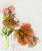 Tulips sketch isolated — Stock Photo