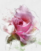 Pink sketch rose flower — Stock Photo