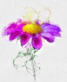 Purple daisy flower — Stock Photo