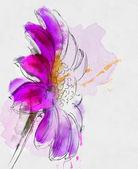 Purple gerbera illustration — Stock Photo