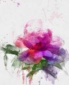 Purple peony illustration — Stock Photo