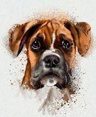 Cute Dog — Stock Photo