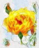 Rose — Zdjęcie stockowe