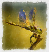 Dragonfly — Foto Stock