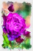 Purple rose — Stock Photo