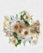 Watercolor camomiles — Stock Photo