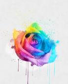 Multicolor rose — Stock Photo