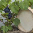 Stock Photo: Vine grapes and wine cask background